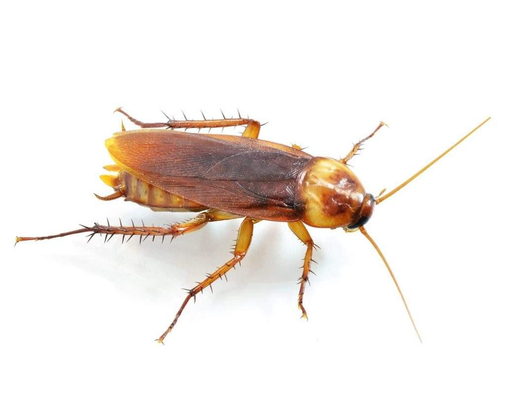 cockroach pest control near me
